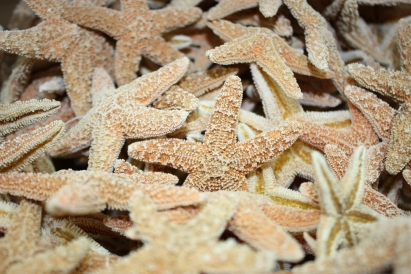 background-starfish-4.jpg