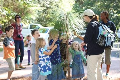 13SCS CC Pine tree